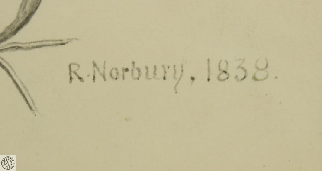 Encyclia sp Orchid RICHARD NORBURY 1838 Pencil Pen Ink - 5