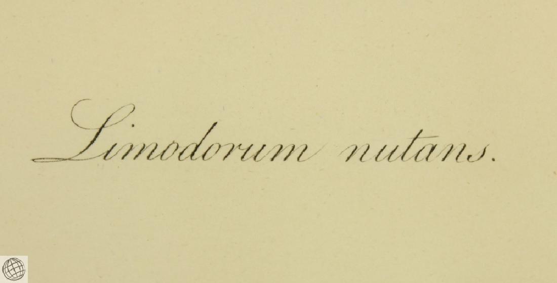Limodorum Nutans WILLIAM ROXBURGH 1795-1820 Engraving - 5