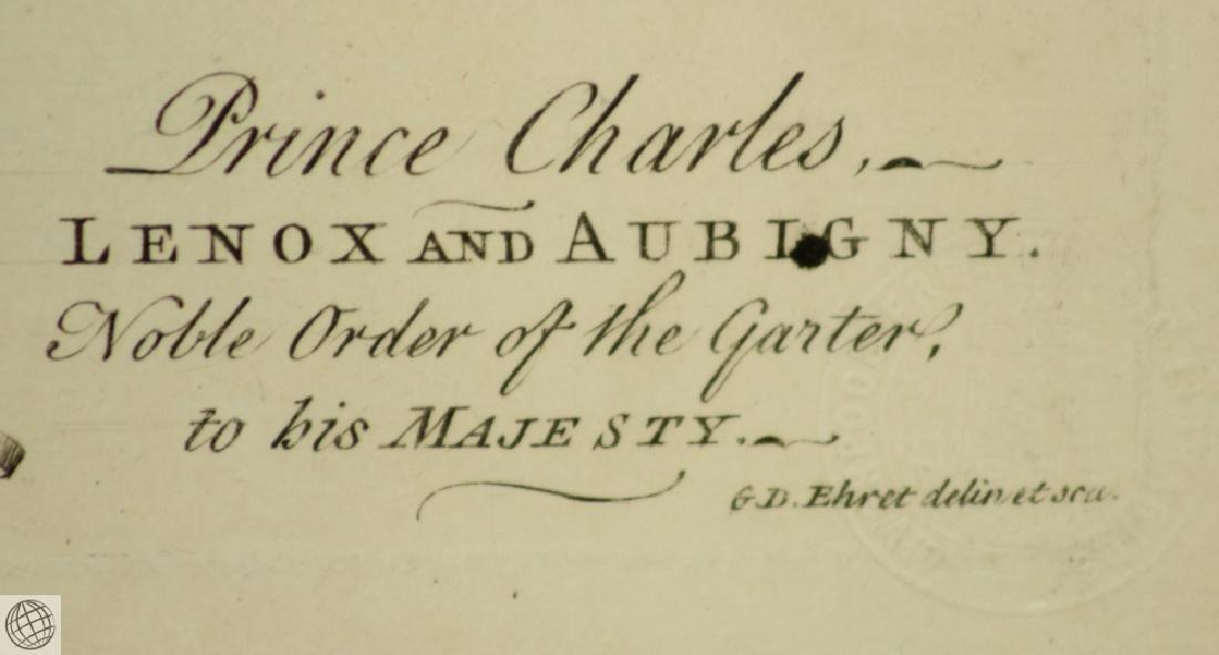 The Pine Apple GEORGE DIONYSIUS EHRET 1750 Copper - 8