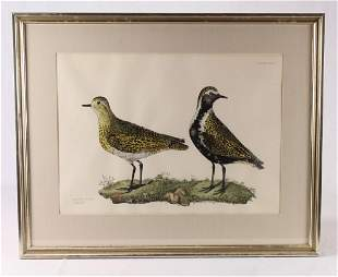 Art JOHN SELBY HANDCOLORED ENGRAVING FROM ILLUSTRATION