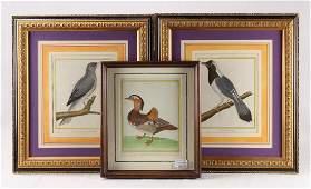 3Pcs Art 18TH CENTURY HAND COLORED ORNITHOLOGICAL