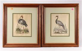 2Pcs Art HAND COLORED ORNITHOLOGICAL ENGRAVINGS BY
