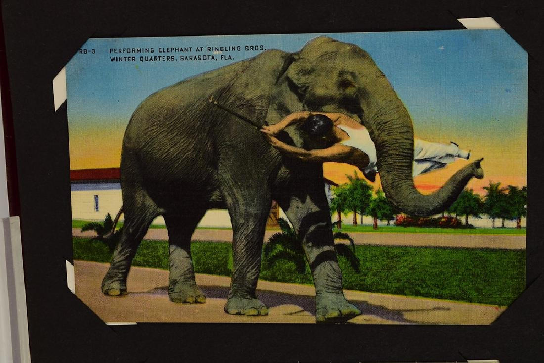 Circus Post Cards ANTIQUE VINTAGE & MODERN COLLECTIBLE - 4