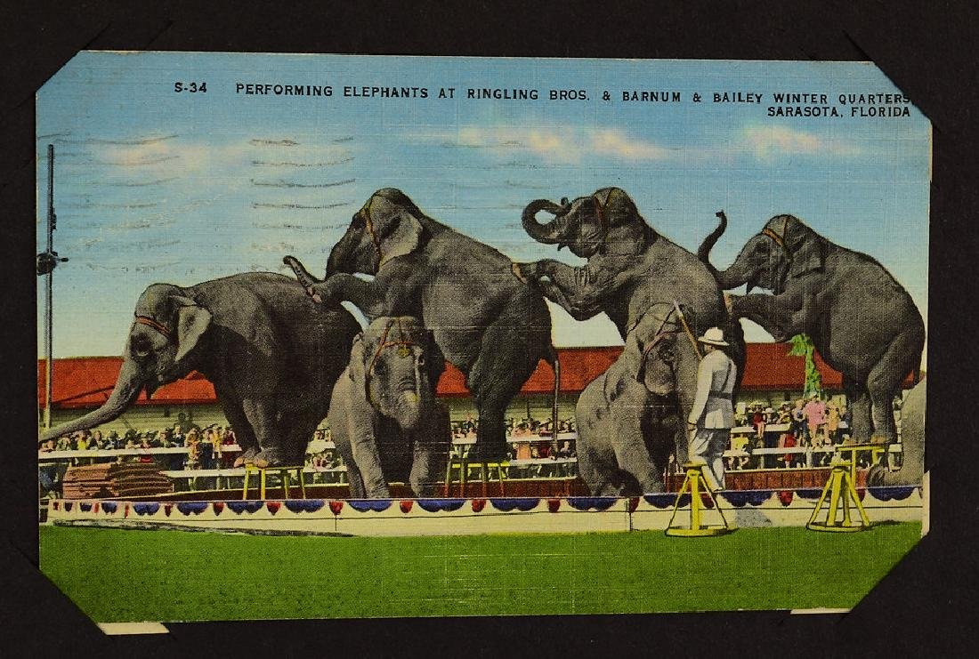 Circus Post Cards ANTIQUE VINTAGE & MODERN COLLECTIBLE - 6