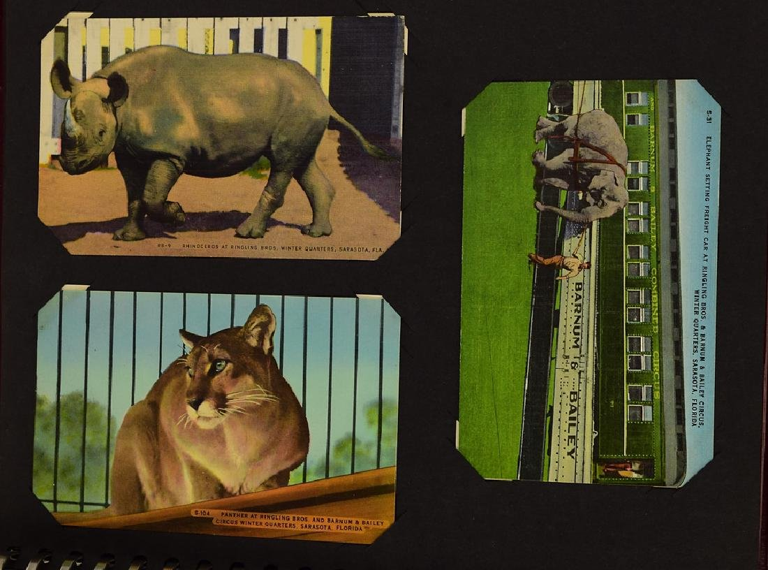 Circus Post Cards ANTIQUE VINTAGE & MODERN COLLECTIBLE - 8