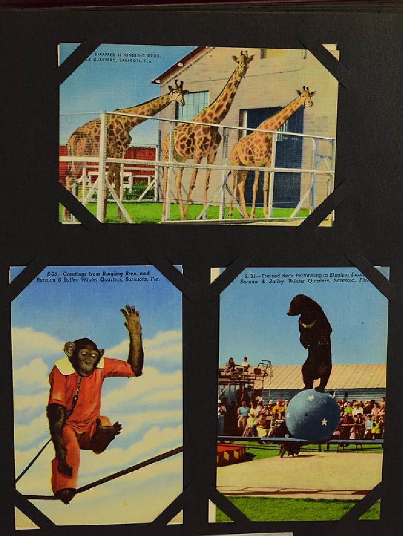 Circus Post Cards ANTIQUE VINTAGE & MODERN COLLECTIBLE - 9