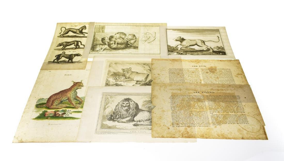 6Pcs Wild Cats ANTIQUE FELINE ZOOLOGICAL PLATES Tiger