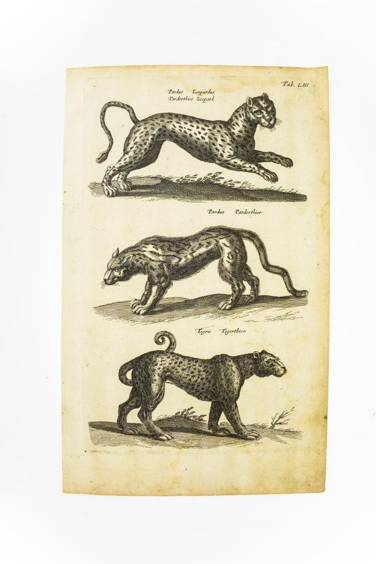 6Pcs Wild Cats ANTIQUE FELINE ZOOLOGICAL PLATES Tiger - 2