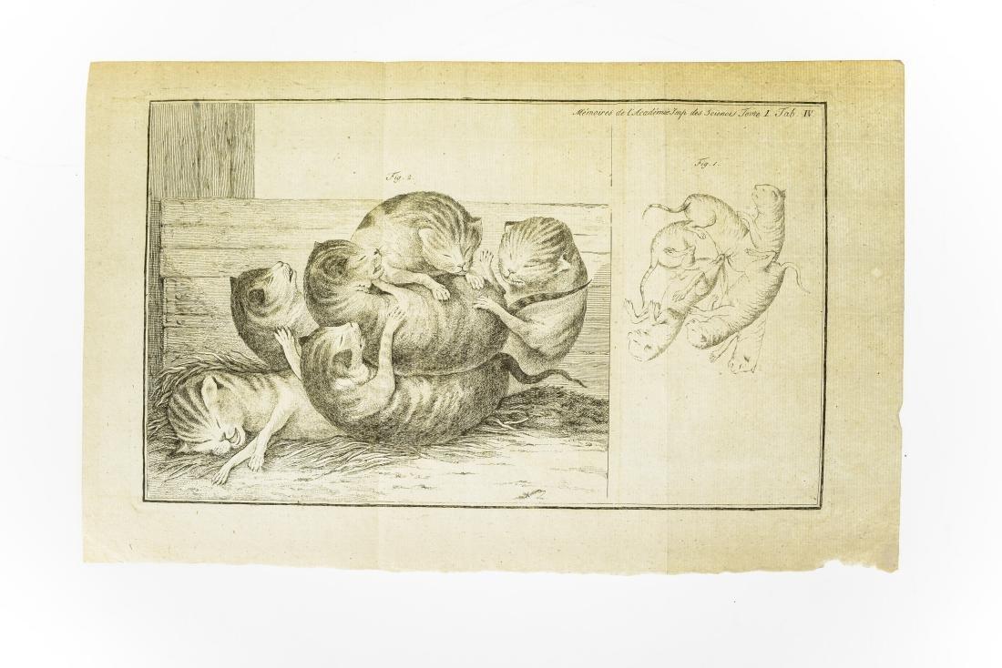 6Pcs Wild Cats ANTIQUE FELINE ZOOLOGICAL PLATES Tiger - 3