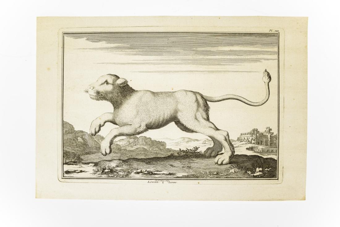 6Pcs Wild Cats ANTIQUE FELINE ZOOLOGICAL PLATES Tiger - 4