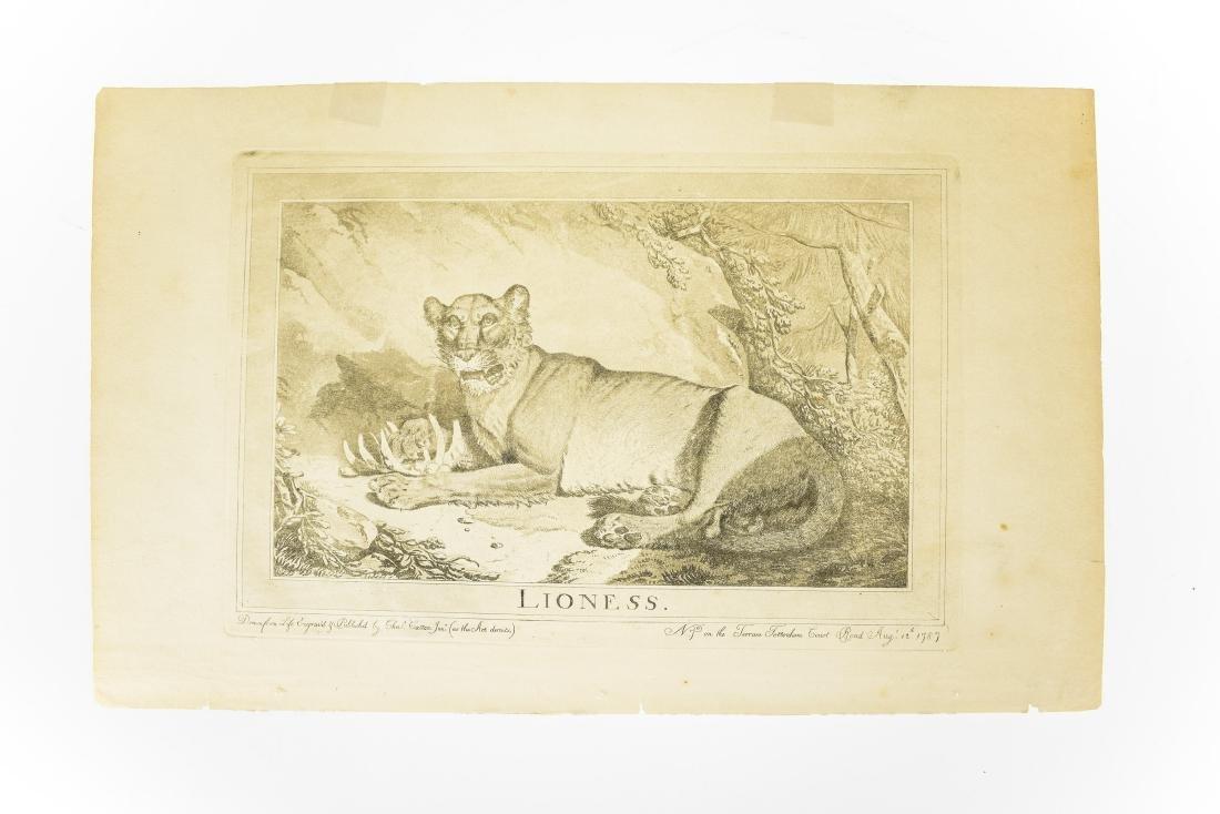 6Pcs Wild Cats ANTIQUE FELINE ZOOLOGICAL PLATES Tiger - 6