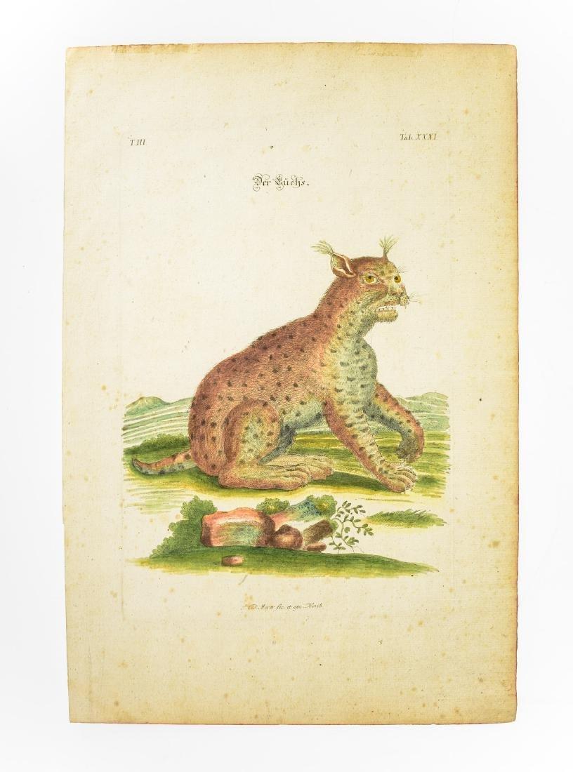 6Pcs Wild Cats ANTIQUE FELINE ZOOLOGICAL PLATES Tiger - 7