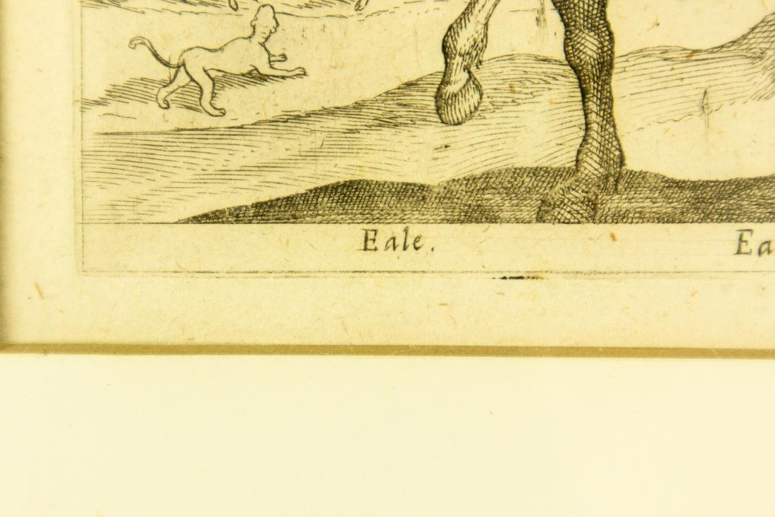 Yale Eale ANTIQUE NATURAL HISTORY ENGRAVING 16th-17th - 6