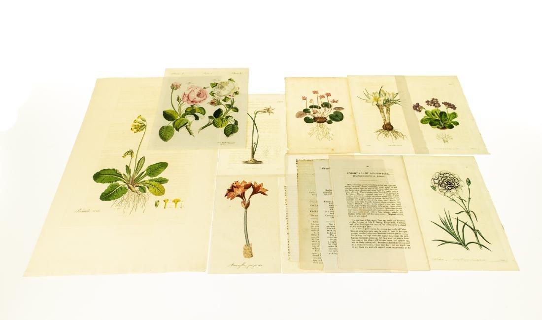 8Pcs Hand-Tinted ANTIQUE BOTANICAL PLATES Original