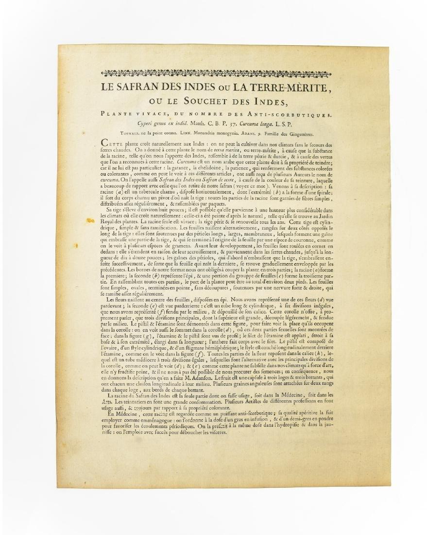 4Pcs Laid Paper ANTIQUE HAND-COLORED BOTANICAL - 3