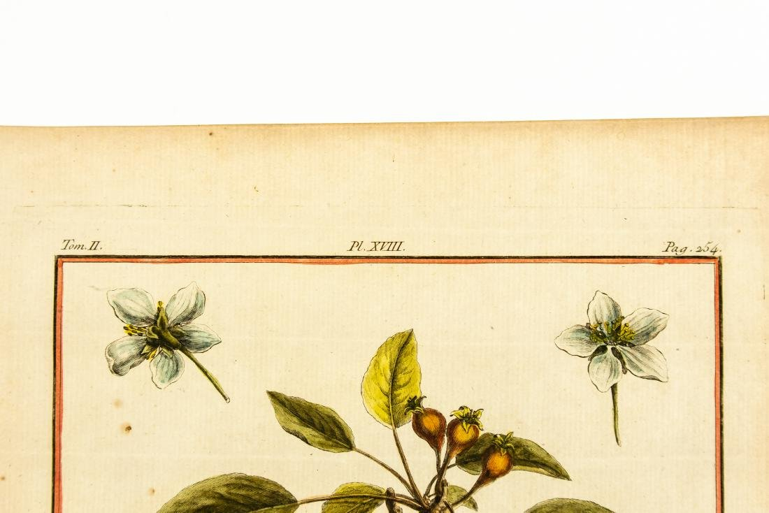 7Pcs Engraved Laid Paper ANTIQUE POMOLOGICAL & - 8