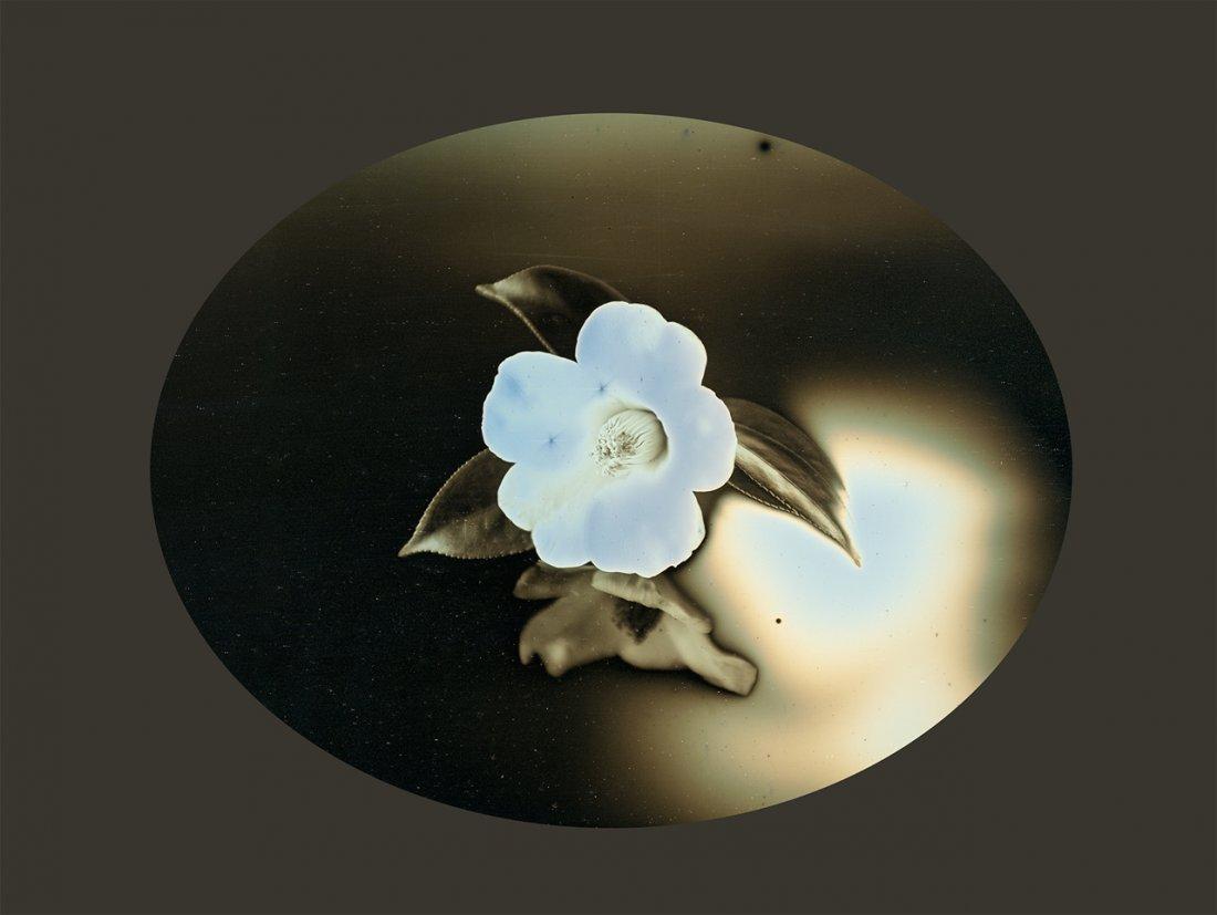 TSUBAKI (CAMILLIA) NO. 1 BY TAKASHI ARAI