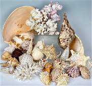 Large Lot of Older Decorative Shells and Coral