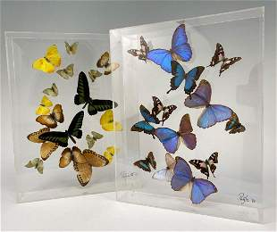 Acrylic Butterfly Displays, Includes The Australian