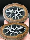 Septarian Rock Crystal Natural Collectible