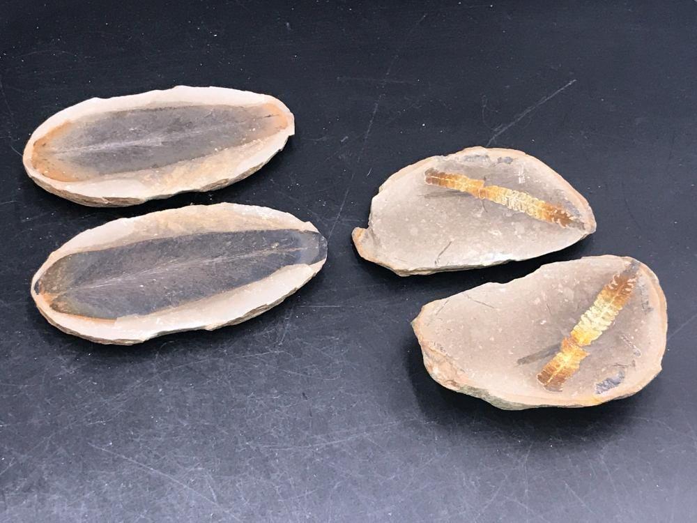 Fern, Fossil, Rock, Collectible, Specimen, Mazon Creek