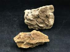 Petrified wood, Fossil, Rock, Natural, Collectible,