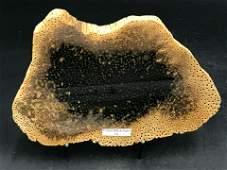 Petrified Wood, Fossil, Rock, Natural, Decor,