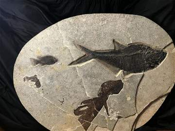 Fish, Fossil, Rock, Natural, Decor, Collectible,