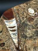 Orthoceras, Rock, Fossil, Natural, Collectible, Plate