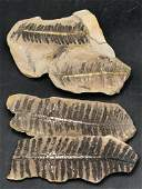 Fern, Fossil, Rock, Natural, Collectible, Specimen,