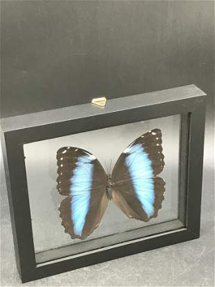 Butterfly, Natural, Decor, Collectible, Insect