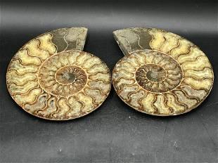 Ammonite, Fossil, Rock, Natural, Collectible, Specimen
