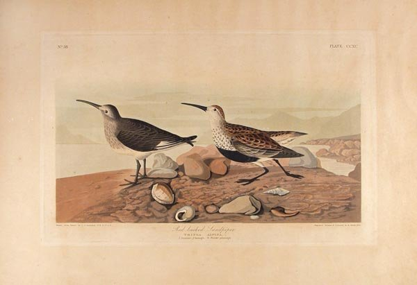 4: JOHN JAMES AUDUBON [AFTER] (American) Havell colo