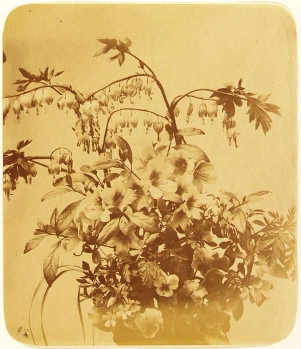 1008: ADOLPHE BRAUN (French) Vintage albumen print