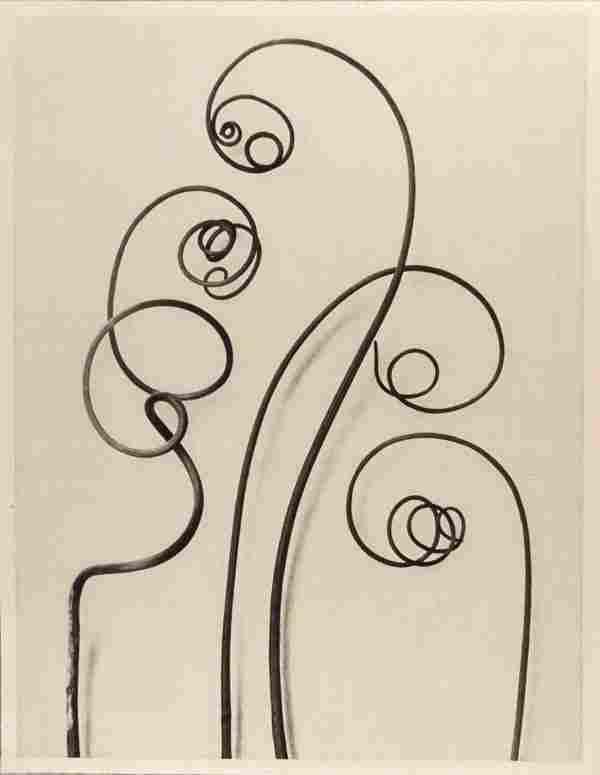 1179: KARL BLOSSFELDT (German) Vintage photogravure