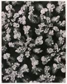 1188: KARL BLOSSFELDT (German) Vintage photogravure
