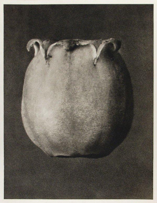 1215: KARL BLOSSFELDT (German) Vintage photogravure