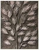 1279: KARL BLOSSFELDT (German) Vintage photogravure