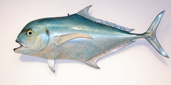 4: Trophy mounted Dolphin caught in the Miami Fishing t