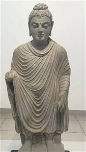Antique 3rd century Gandhara Buddha (Rare Art )