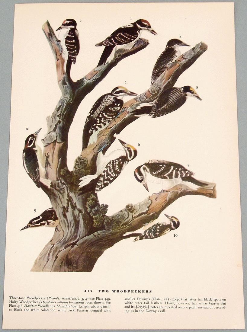Old Bird Prints - Woodpecker & Ptarmigan