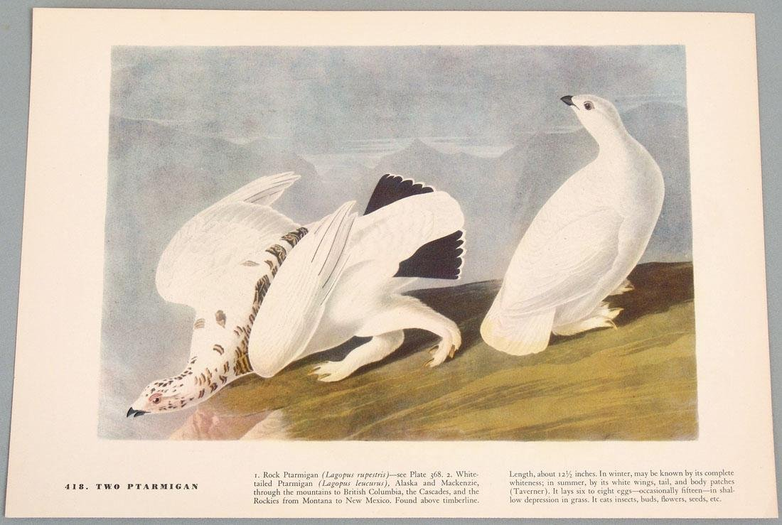 Old Bird Prints - Woodpecker & Ptarmigan - 2