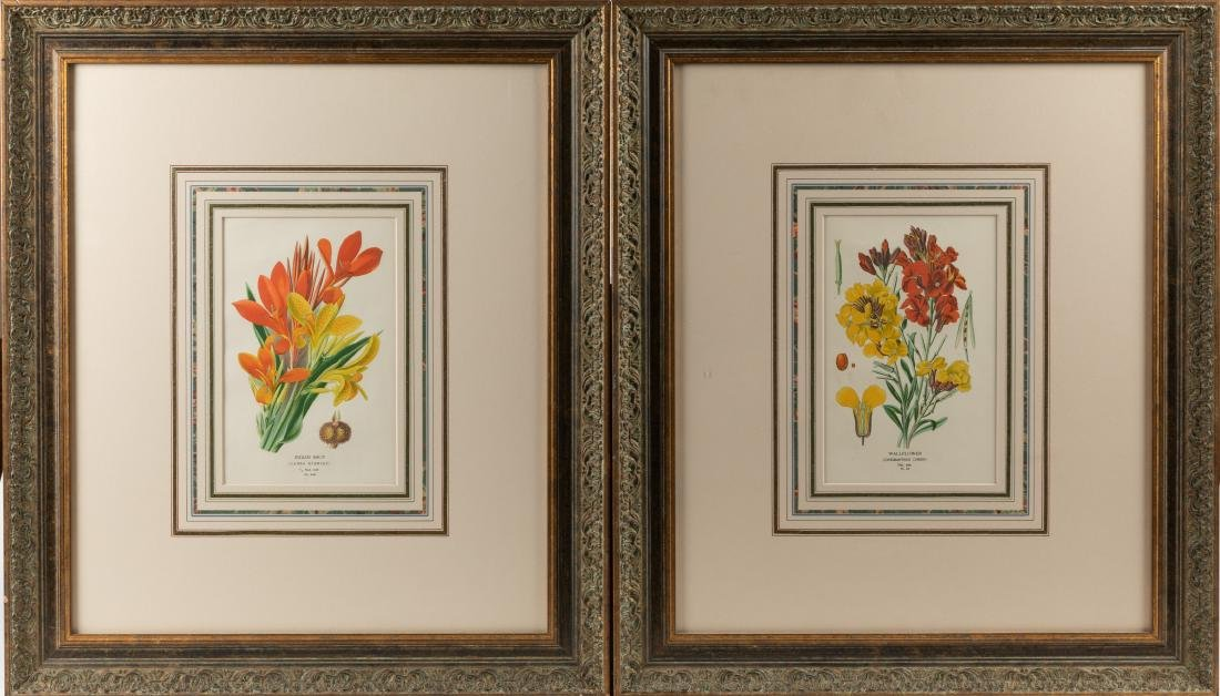 Two Botanical Prints
