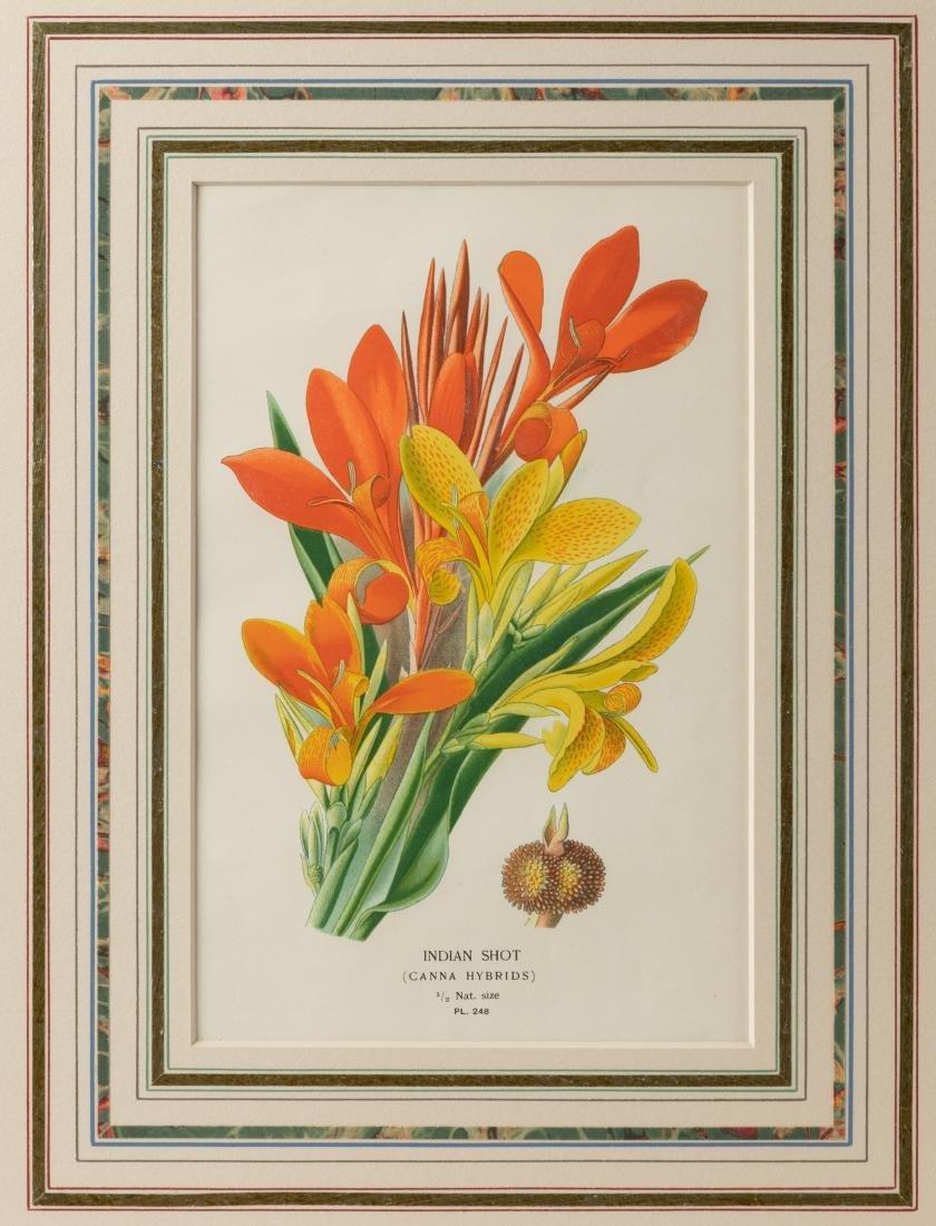 Two Botanical Prints - 2
