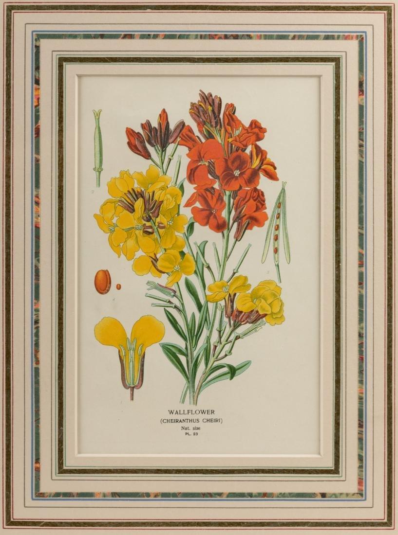 Two Botanical Prints - 3