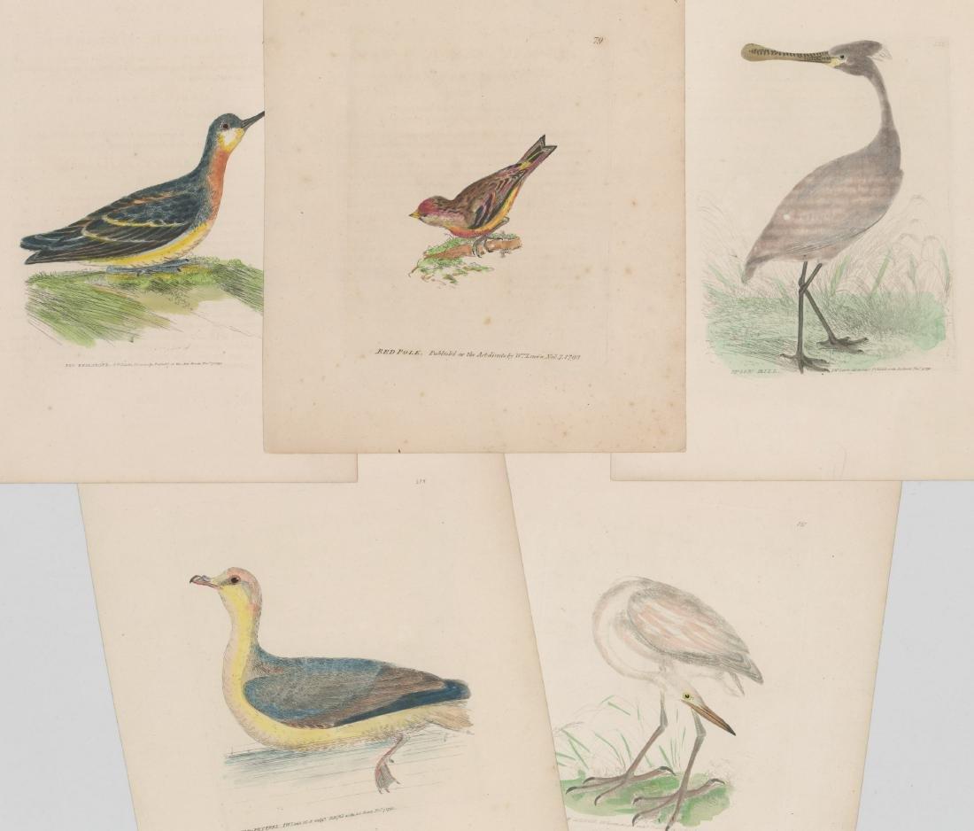 William Lewin (1747-1795) Colored prints