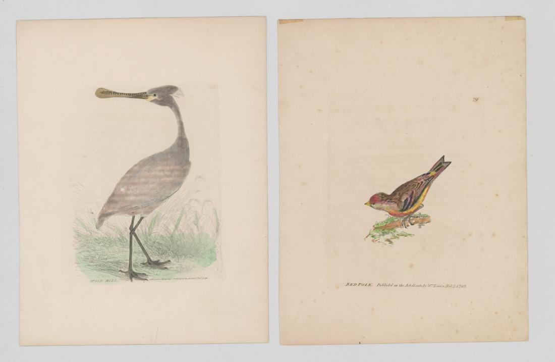 William Lewin (1747-1795) Colored prints - 2
