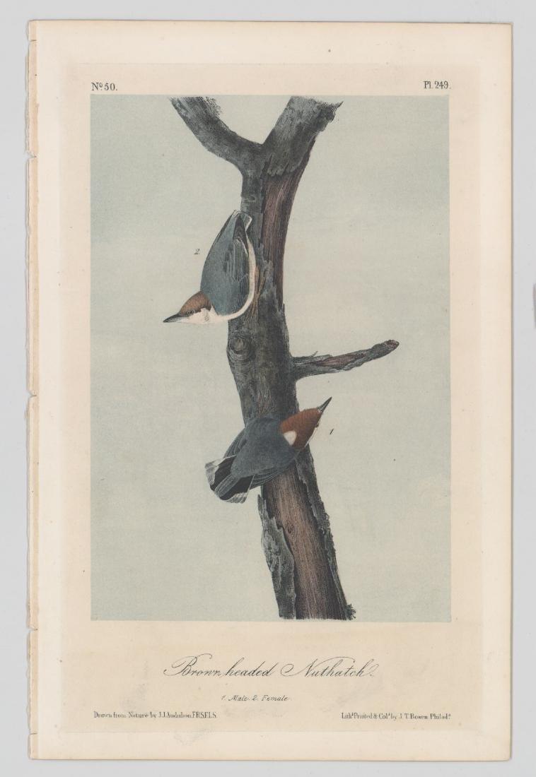 J.T. Bowen Audubon Prints, Two - 2