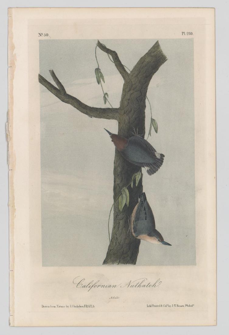 J.T. Bowen Audubon Prints, Two - 3