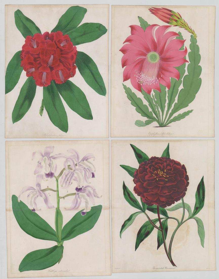 Paxton's Magazine Botanical Prints 1834-1838